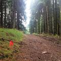 Eine rote Schleife im Wald?