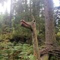 Ein Einhorn mitten im Wald