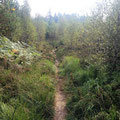 Der Weg dahin führt über den Langmartskopf (942m)