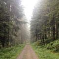 ganz stille ist es im tiefen Wald