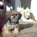 meine beiden Hunde Lilli & Luna 10.2009