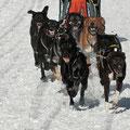 KK-Schlittenhunderennen am Gaberl (22.1.2012)