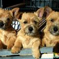 Aischa, Akira und Arthus 5 Monate