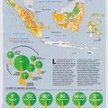 GEO / Déforestation en Indonésie / Deforestation in Indonesia map