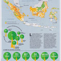 GEO / Déforestation en Indonésie / Deforestation in Indonesia map