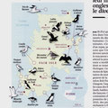 GEO / Fair Isle (Shetland) birds / Map + art