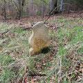 Der Jägerstein, Grabstele des tot aufgefundenen Jägers des Schlossherrn von Capellan.