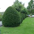 Gartenpflege Hannover Heckenschnitt, Formschnitt von GreenFairway e.K.