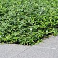 gebrauchsfertige Bodendecker von GreenFairway e.K.