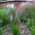 Dasselbe Objekt ein Jahr nach der Gartengestaltung, GreenFairway e.K.