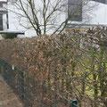 Heckenschnitt, Formschnitt Hannover, Burgwedel, Isernhagen, GreenFairway e.K.