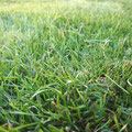 Rasenpflege, Gartenpflege, Rollrasen verlegen von GreenFairway e.K.