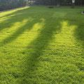 Rasenpflege, Rollrasen, Fertigrasen, GreenFairway e.K.