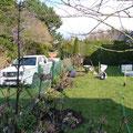 Gartenpflege Hannover: Anpflanzung von Solitärsträuchern, GreenFairway e.K.