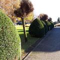 Gartenpflege Hannover von GreenFairway e.K.