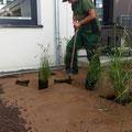 Gartengestaltung Hannover: Kiessbeet mit Lavadur und Gräsern... während des Pflanzens, GreenFairway e.K.