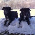 Polly und Faye