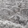 2014年2月8日 工房からの雪景色