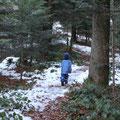 Der lange Weg durch den Wald...