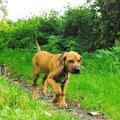 Spaziergang mit Sabine
