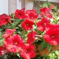 夏の花(^.^)