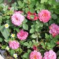 自然に咲く花
