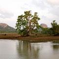 Halmilla Wewa, Blick auf  Sigiriya, Sri Lanka