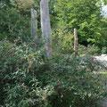 """Initialbepflanzung in den """"geschützten"""" Pflanzinseln"""