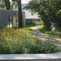 Blick entlang der LSW zum neuen Pavillon
