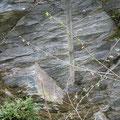 Bohrlochpfeife an der Felswand: Hier wurde gebohrt und geschossen!
