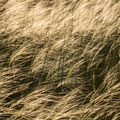 Ein sanfter Hauch im Grasmeer