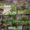 Im Mauerwerk hier sind Steine aus mindestens fünf verschiedene Quellen verbaut