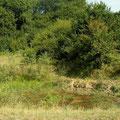 Habitat van boomkikker, groene kikker en kamsalamander.