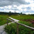 Bauernhofurlaub in  NRW - auf den Bretterstegen im Hohen Venn unterwegs