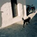 Dog, Hora, Patmos