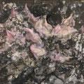 Ariocarpus retusus 岩牡丹 F6 2019