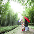 美しい竹林はまるで別世界!