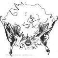 Murin à oreilles échancrées - Myotis emarginatus - Glénac