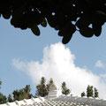 nunen屋根とフクギ