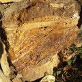Haldenmaterial alter Bergbau
