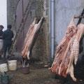 Deux cochons tués à La Ciradelle en 1987.