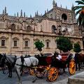 Pferdekutschen vor der Kathedrale von Sevilla