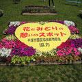 平塚市園芸協会花き部会提供の草花