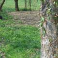 ...sitzen unterm Hollerbusch machen alle husch husch husch...