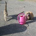 Kitty.Miezi und Little John