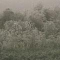 Spargelfeld / Asparagus field