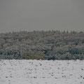 Der erste Schnee 2012/13 / First snow 2012/13