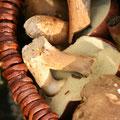 Ein gutes Pilzjahr / a good mushroom year - © Thomas Kruschina