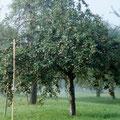 Unser besster Baum dieses Jahr / Our best tree this year