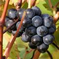 wonderful Loire wines to taste